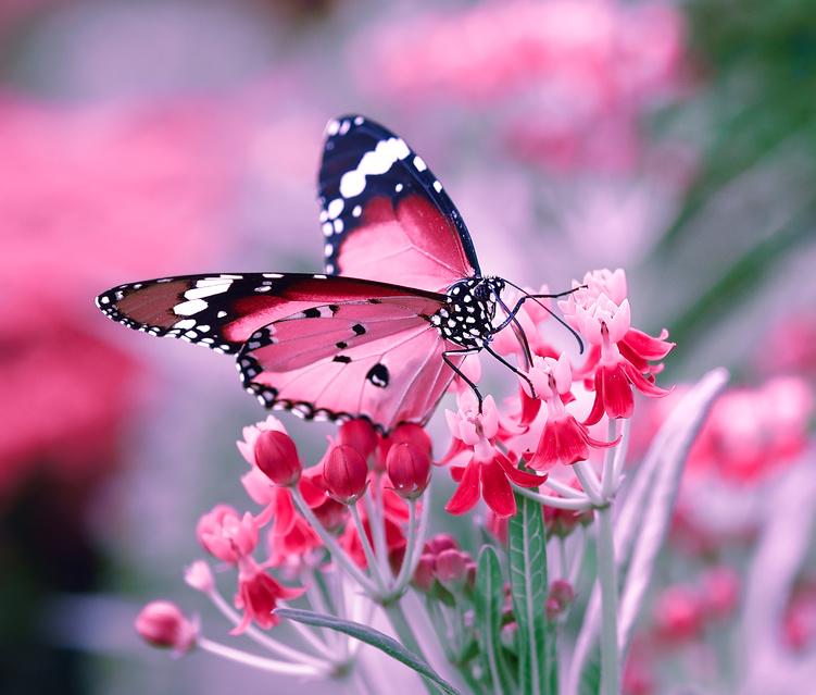 Aquarium et jardins aux papillons de vannes - Images de papillon ...